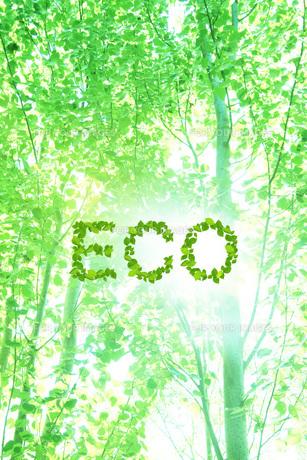 エコロジーイメージの素材 [FYI00045767]