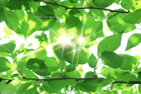 新緑の素材 [FYI00045779]