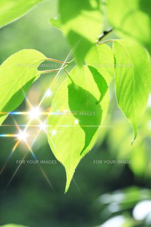 新緑の素材 [FYI00045798]