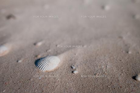 海辺の貝殻の素材 [FYI00073355]