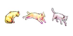 猫三匹の素材 [FYI00108896]