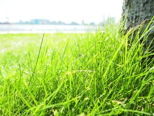 緑の草原の素材 [FYI00108961]