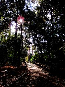 井の頭公園の散歩道の素材 [FYI00112900]