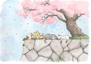桜の木の下で寝る猫の素材 [FYI00116798]