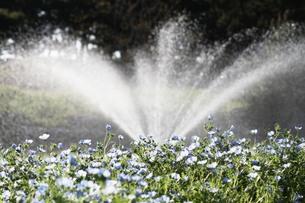 水色の花と噴水の素材 [FYI00131414]