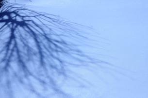 雪に落ちた影の素材 [FYI00168519]