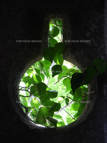 緑の窓の素材 [FYI00169422]