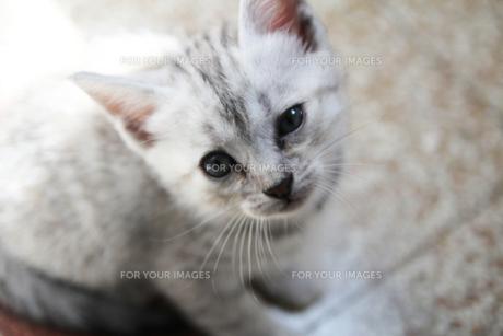 トスカーナの子猫(ちょっぴりウィンク)の素材 [FYI00169485]