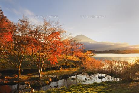 紅葉と富士♪の素材 [FYI00180267]
