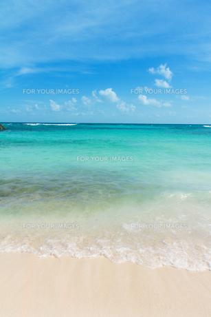 エメラルドグリーンのカリブ海の渚の素材 [FYI00198031]