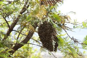 マウイの蜂の巣の素材 [FYI00232999]