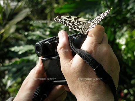 蝶々とカメラの素材 [FYI00417444]