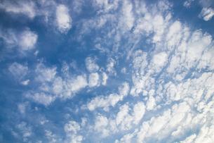 background[cirrostratus_sky]_013の素材 [FYI00446879]