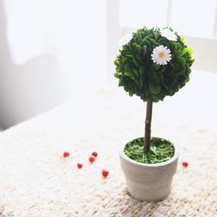 観葉植物と花の素材 [FYI00447603]