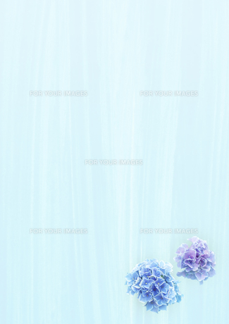 雨とアジサイの花の素材 [FYI00466146]