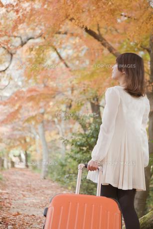秋の紅葉した公園でトランク引っ張る女性の素材 [FYI00467261]