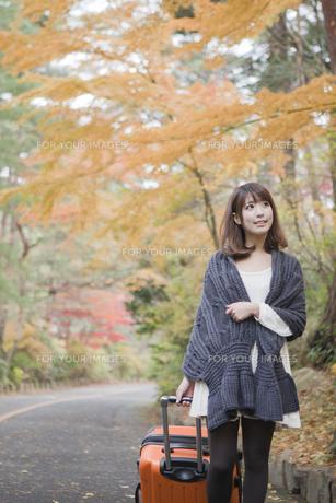 秋の紅葉した公園でトランクを引いている女性の素材 [FYI00467295]