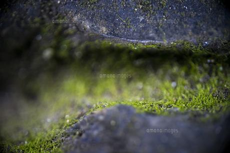 石段と苔の写真素材 [FYI00543739]