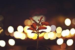 水玉と一本の葉の写真素材 [FYI00620257]
