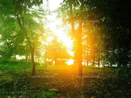森と西日の写真素材 [FYI00623007]