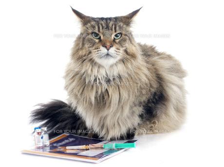 pussycatの素材 [FYI00668585]