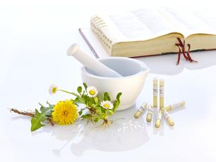 mortar dandelion daisy nature medicineの素材 [FYI00680047]