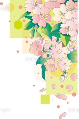 桜の背景のイラスト素材 [FYI00884716]