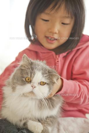 猫を手でなでる少女の素材 [FYI00945293]