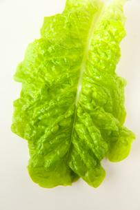 サラダ菜の素材 [FYI00945407]