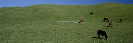 馬の牧場風景の素材 [FYI00952835]