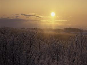 霧氷と朝日の素材 [FYI01014947]