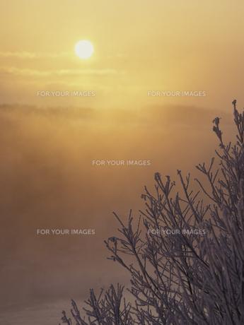 霧氷と朝日の素材 [FYI01015022]