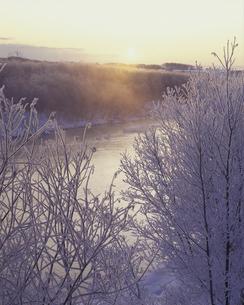 霧氷と朝日の素材 [FYI01015117]