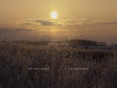 霧氷と朝日の素材 [FYI01015156]