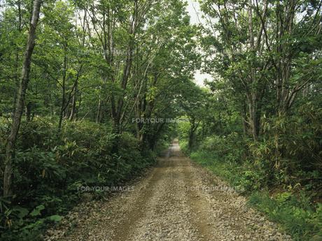林道の素材 [FYI01015203]