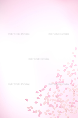 桜の花びらの春イメージの素材 [FYI01016653]