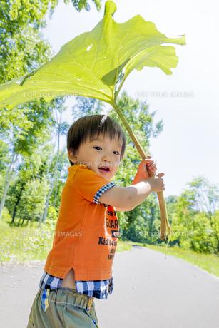 公園で大きなフキを傘がわりにする男の子の素材 [FYI01075249]