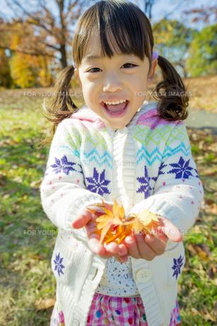 紅葉の公園でモミジの葉っぱを手のひらに乗せて笑う女の子の素材 [FYI01075587]