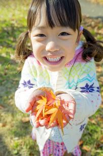 紅葉の公園でモミジの葉っぱを手のひらに乗せて笑う女の子の素材 [FYI01075636]