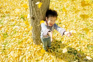 落葉の公園でイチョウの葉を投げる男の子の素材 [FYI01075643]