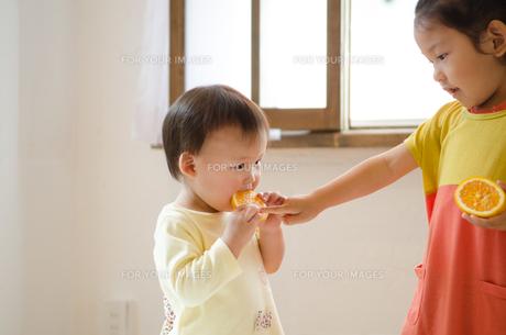 オレンジを食べている姉妹の素材 [FYI01077551]