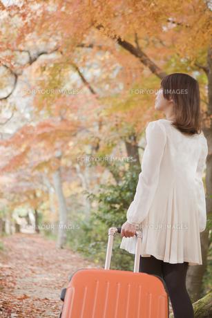秋の紅葉した公園でトランク引っ張る女性の素材 [FYI01096700]