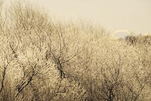 朝の雪裡川の樹氷の素材 [FYI01131516]