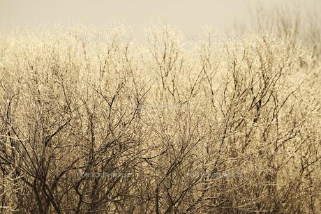 朝の雪裡川の樹氷の素材 [FYI01131521]