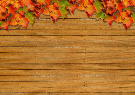 背景素材 / 秋の自然のイラスト素材 [FYI01217896]