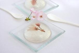 プルルーン桜ゼリーの写真素材 [FYI01224850]